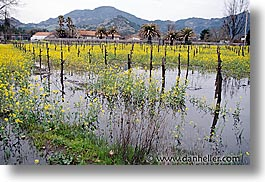 california, horizontal, napa, vineyards, west coast, western usa, wet, photograph