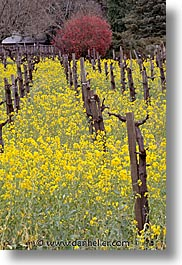 california, napa, vertical, vineyards, west coast, western usa, photograph