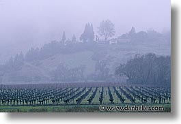 california, horizontal, napa, vineyards, west coast, western usa, photograph