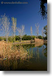 california, nipton, pond, vertical, west coast, western usa, photograph