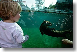 animals, boys, california, childrens, horizontal, jacks, oakland zoo, otter, toddlers, watching, water, west coast, western usa, photograph