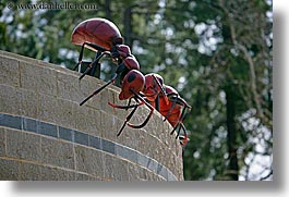 ants, arts, california, horizontal, insects, oakland zoo, sculptures, walls, west coast, western usa, photograph