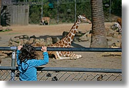 california, childrens, giraffes, girls, horizontal, looking, oakland zoo, people, west coast, western usa, photograph