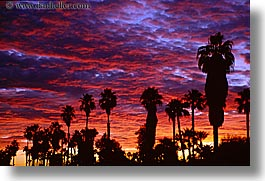california, horizontal, palm springs, palm trees, sunrise, west coast, western usa, photograph
