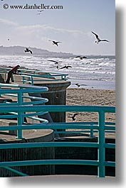 animals, bars, beaches, birds, california, nature, ocean, pigeons, san diego, vertical, water, waves, west coast, western usa, photograph