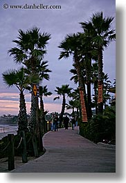 beaches, california, dusk, lighted, nature, palm trees, plants, san diego, sidewalks, trees, vertical, west coast, western usa, photograph
