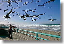animals, beaches, birds, california, feeding, horizontal, nature, ocean, people, pigeons, san diego, water, waves, west coast, western usa, womens, photograph