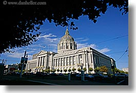 branches, california, city hall, horizontal, san francisco, west coast, western usa, photograph