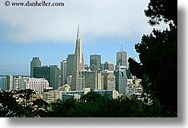 california, cityscapes, horizontal, san francisco, trees, west coast, western usa, photograph