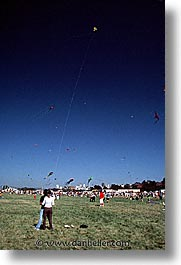 california, chrissy field, crissy field, flying, kites, san francisco, vertical, west coast, western usa, photograph