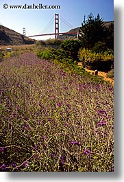 bridge, california, flowers, golden gate, golden gate bridge, national landmarks, san francisco, vertical, weedy, west coast, western usa, photograph