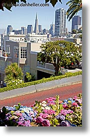 buildings, california, lombard, lombard street, san francisco, trans, vertical, west coast, western usa, photograph