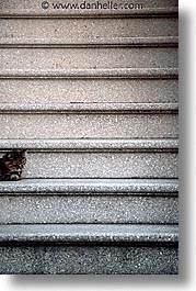 california, cats, san francisco, stairs, vertical, west coast, western usa, photograph