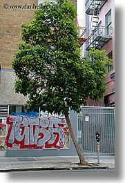 arts, california, graffiti, san francisco, trees, vertical, west coast, western usa, photograph