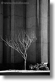 black and white, california, ofa, palace, palace fine art, palace of fine art, san francisco, trees, vertical, west coast, western usa, photograph