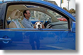 basset, bug, california, horizontal, men, people, san francisco, west coast, western usa, photograph