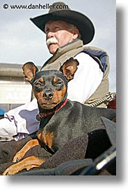 california, cowboys, dogs, men, people, san francisco, vertical, west coast, western usa, photograph