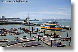 california, ferry, gold, horizontal, lions, piers, san francisco, seas, west coast, western usa, photograph
