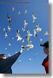 california, feeding, piers, pigeons, san francisco, vertical, west coast, western usa, photograph