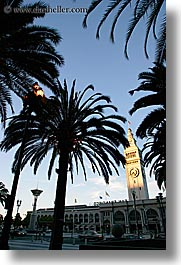 buildings, california, clocks, palm trees, ports, san francisco, towers, trees, vertical, west coast, western usa, photograph