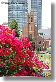 california, churches, san francisco, st patricks, vertical, west coast, western usa, yerba buena, photograph