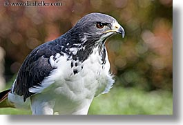 animals, augur, birds, buzzard, california, horizontal, san francisco, west coast, western usa, zoo, photograph