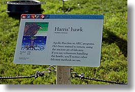 animals, birds, california, harris, hawk, horizontal, san francisco, signs, west coast, western usa, zoo, photograph
