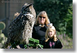 animals, birds, california, childrens, great, horizontal, horned, mothers, owls, san francisco, west coast, western usa, womens, zoo, photograph