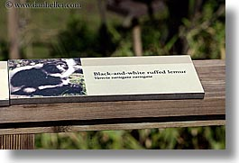 animals, black, california, horizontal, lemurs, ruffed, san francisco, signs, west coast, western usa, white, zoo, photograph