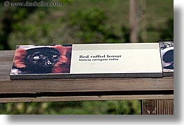 animals, california, horizontal, lemurs, red, ruffed, san francisco, signs, west coast, western usa, zoo, photograph