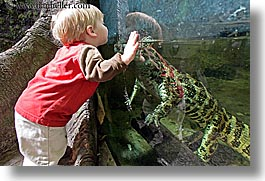 animals, babies, boys, caiman, california, childrens, horizontal, reptiles, san francisco, toddlers, west coast, western usa, zoo, photograph