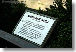 animals, california, cats, horizontal, san francisco, signs, sumatran, tigers, west coast, western usa, zoo, photograph