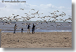 beaches, birds, california, childrens, families, horizontal, nature, ocean, people, santa barbara, toddlers, water, west coast, western usa, photograph