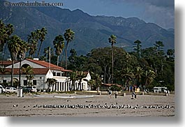 beaches, birds, buildings, california, horizontal, mountains, nature, palm trees, plants, santa barbara, trees, west coast, western usa, photograph