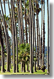 california, nature, palm trees, plants, santa barbara, trees, vertical, west coast, western usa, photograph