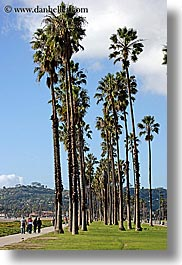 california, nature, palm trees, paths, pedestrians, people, plants, santa barbara, trees, vertical, west coast, western usa, photograph