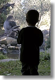 animals, boys, california, childrens, gorilla, people, primates, santa barbara, silhouettes, vertical, watching, west coast, western usa, zoo, photograph