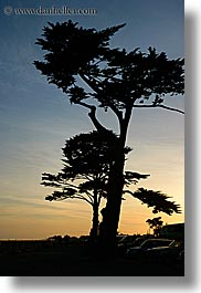 california, nature, plants, santa cruz, silhouettes, sky, sun, sunsets, trees, vertical, west coast, western usa, photograph
