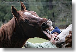california, emotions, horizontal, horses, humor, jills, laugh, people, santa cruz, west coast, western usa, womens, photograph