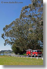 bodega bay, california, fire truck, sonoma, tall, trees, vertical, west coast, western usa, photograph