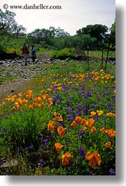 california, flowers, poppies, sonoma, vertical, west coast, western usa, photograph