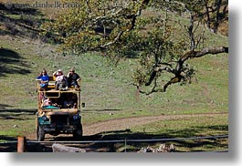 big animals, california, horizontal, safari west, sonoma, tourists, trucks, west coast, western usa, photograph