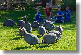 animals, birds, boys, california, childrens, crested, guineafowl, horizontal, kenya, people, safari west, sonoma, west coast, western usa, photograph