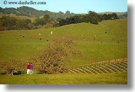 california, hikers, horizontal, scenics, sonoma, vineyards, west coast, western usa, photograph