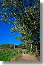 california, hiking, paths, scenics, sonoma, vertical, west coast, western usa, photograph