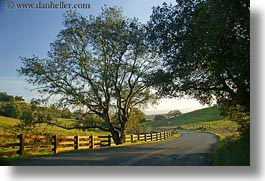 california, horizontal, roads, scenics, sonoma, trees, west coast, western usa, photograph