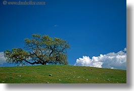 california, clouds, fields, green, horizontal, lone, sonoma, trees, west coast, western usa, photograph