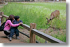 animals, boys, california, childrens, deer, horizontal, mothers, people, toddlers, west coast, western usa, womens, yosemite, photograph