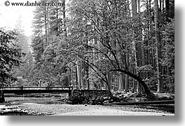 black and white, bridge, california, curved, forests, horizontal, nature, over, plants, stream, structures, trees, west coast, western usa, yosemite, photograph