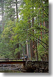 bridge, california, forests, jack and jill, nature, plants, redwoods, structures, trees, vertical, west coast, western usa, yosemite, photograph